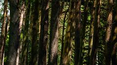 P6221490 stand together (mark4harrison) Tags: bruetonpark warwickshirewildlifetrust