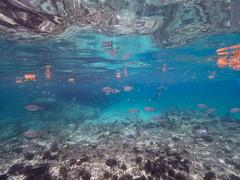 Telepathic Communication - 10/19 (Wildquest Bimini) Tags: dolphin swim wild atmoji wildquest dolphinswim underwater swimmingwithdolphin atlanticspottedspotted bimini bottlenose ocean nature wilddolphins wilddolphinswim