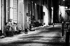 Déambulation nocturne (Stephane Rio 56) Tags: life street bw france night town europe nb rue nuit ville vie bouchesdurhone provencealpescotedazur cat chat flickrunitedaward