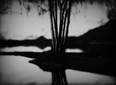 Trees on Peninsula at Night (Rick Exstrom) Tags: rickexstrom trees water blackandwhite blurry soft softfocus dark