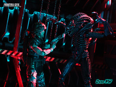 Eat This! (Frontera Geek) Tags: alien xenomoph xenomorfo aliens 2 warrior guerrero soldado neca ultimate frontera geek action figure figures figuras de accion diorama actionfigure actionfigures acba articulated comic book art