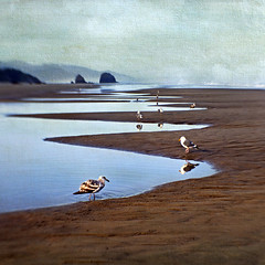 upon the beaches (1crzqbn) Tags: lensbaby sweet35 birds sliderssunday seascape cannonbeachor 1crzqbn nature