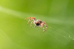 Spider | Explored on 2019.06.25 | Thank you all! (Pásztor András) Tags: d5100 dslr nikon andras pasztor photography spider macro detailed web green grass sigma 105mm lens
