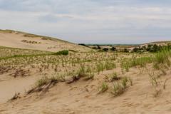 In the Dunes (mattbpics) Tags: capecod duneshacks duneshack trail hike provincetown truro massachusetts canon t3i tamron 1750 1750mm sand landscape provincelands