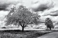 Attraction... (Ody on the mount) Tags: anlässe blüten bäume canon fototour g7xii himmel pflanzen powershot schwäbischealb wolken bw blackandwhite clouds monochrome sw schwarzweis sky