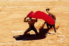 Impressions Istres 2019 (aficion2012) Tags: istres 2019 france francia provence bullfight corrida tauromaquia tauromachie torero matador arènes ruedo bull toros taureaux capote capa larga cambiada de rodillas novillero novillada novillo maxime solera gayola