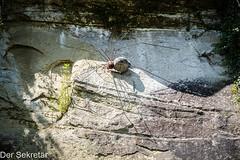 DIe Spinne --- The spider (der Sekretär) Tags: detail schweiz pflanze skulptur spinne fels rost metall felsen burgdorf eisen gewächs kantonbern sculpture plant stain rock metal closeup switzerland spider rust iron rusty growth verrostet rostig lasuisse cantondeberne