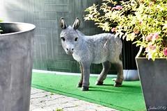 ~~ Coucou Toi...~~ (Joélisa) Tags: juin2019 âne donkey objet statue pots fleurs