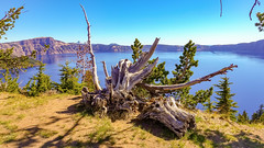 Crater Lake National Park, Oregon (lhboudreau) Tags: craterlake park nationalpark lake water deepbluewater crater rim volcano collapsedvolcano tree trees pine pines outdoor outdoors landscape oregon craterlakenationalpark sleepingvolcano dormantvolcano deadtree stump pacificnorthwest