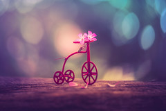 Summer bike (Ro Cafe) Tags: bicycle lensbaby macro sonya7iii stilllife twist60 closeup evening flowers garden macroconverter miniature summer toy bokeh selectivefocus colorful naturallight