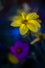 Yellow ([-ChristiaN-]) Tags: flower blossom blüte blume pentacon soft 28 80mm projectionlens yellow blue bokeh bokehlicious colorful bunt gelb farben lens manual focus