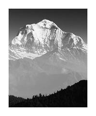 Dhaulagiri (SiKenyonImages) Tags: dhaulagiri nepal himalayas mountain southface vertical snow rock phulbari annapurna mono blackandwhite bw