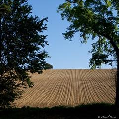 Labours, toujours labours (IMGP2194) (Dnl75) Tags: canal canaldumidi france landscape paysage