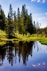15-06 - Bergen - Nature reflections (FedeWatchTheHorizon) Tags: norway norvegia travel travelphotography
