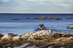South Bay (Greenstone Girl) Tags: kaikoura southbeach southbay boat boatie water blue limestone rocky folded