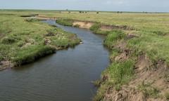 Creek (Photographs By Wade) Tags: osagecounty oklahoma creek water prairie grasslands stream