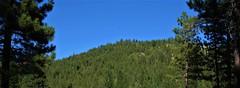 Ridgeline (The VIKINGS are Coming!) Tags: sierras forest bear mountainlion wilderness pines green alpine mountains trail hiking trek laketahoe elevation hawk eagle owl deer bare nakedbeauty solstice