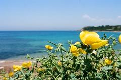 Area mediterranea (michele.palombi) Tags: ektar100 kodak film35mm analogicshot calabria lecastella