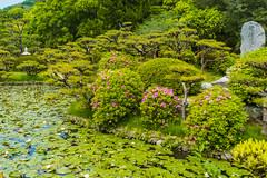 Dogo Park Landscape (Bracus Triticum) Tags: dogo park landscape 5月 五月 早月 gogatsu satsuki fastmonth 2018 令和元年 summer may reiwa matsuyama ehimeprefecture shikoku 四国 愛媛県 松山市 日本 japan