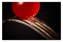 """TOMATO _ MM _ """"Styling Food on a Fork"""" (Werner Demming) Tags: wernerd macromondays stylingfoodonafork olympus mft microfourthirds macro makro color farbe zwischenring tomate gabel tomato fork food"""