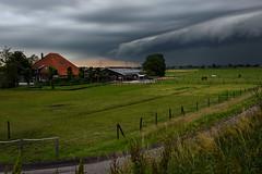 Before the storm (Julysha) Tags: nauerna storm rainy farm thenetherlands noordholland horses field countryside acr d7200 nikkor1680284 summer june road cloud