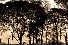 IMG_9500ri (StK-WI) Tags: apsc asien asia natur nature assam bunt bäume trees canon colourful camera colour colorful color chariali dslr dorf eos foto flickr farbig flus fluss brahmaputra river garamur garmur holidays holiday urlaub vacation india incredibleindia indien incredible insel island majuli kolle kamera landschaft landscape kamalabari northeast northeastindia objektiv photo stephankolle stkwi stephan sevensisters seven sisters dämmerung 70300mm 2019 sonnenuntergang sunset sonne sun sunny sonnig bicycles people men 60d
