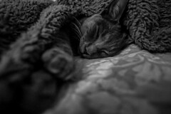 #cats #gatos #lovecat #bw #byn (Natitolu) Tags: cats bw byn gatos lovecat