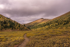 Opal Hills 5 (www78) Tags: canada jasper maligne nationalpark lake opal hills national park alberta
