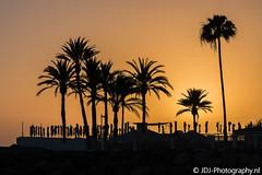 Sunset palm trees (JdJ Photography (www.jdj-photography.nl)) Tags: arguineguín mogán grancanaria provinceoflaspalmas canarischeeilanden canaryislands spanje spain europa europe continent dag day overdag daytime avond evening zonsondergang sunset palmbomen palmtrees hotel resort toerisme tourism