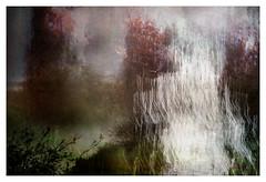 In my dream (Peter & Olga) Tags: multilayered interpretation dreamlike trees birds southernhighlands multipleexposure slowexposure blur fujifilm winter 2019 olgabaldock