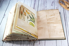 IMG_2611 (thejournalsquirrel) Tags: junkjournal journal thejournalsquirrel books bookbinder mixedmedia bookart paper art journaling artjournaling bibliophile ilovebooks commonplacebooks