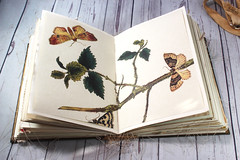 IMG_2591 (thejournalsquirrel) Tags: junkjournal journal thejournalsquirrel books bookbinder mixedmedia bookart paper art journaling artjournaling bibliophile ilovebooks commonplacebooks