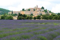 P1140476 (alainazer2) Tags: banon provence france fiori fleurs flowers fields champs ciel cielo colori colors couleurs sky lavande lavanda lavender village