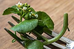 Watercress (alison's daily photo) Tags: stylingfoodonafork macromondays macro watercress fork