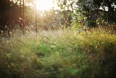 Afternoon light (Katie Tarpey) Tags: nikkor50mm14 nikonfm10 kodakportra400 35mm venusbay easter autumn country grass film light