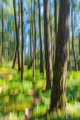 Nature's Beauty in Blur Pic #2 (Picture-Perfect Pixels) Tags: forest blur blurred intentionalcameramovement trail franciskingregionalpark trees abstract artsy woodland nature artistic vancouverisland britishcolumbia colourful park outdoors flickrexplorejune242019