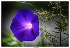 Flower ... (michel di Méglio) Tags: macro fleur flower macroflower couleur color stackingfocus empilement