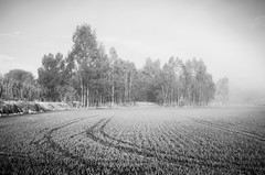 Mist in the field... (Capturedbyhunter) Tags: fernando caçador marques fajarda coruche ribatejo santarém portugal pentax k5 smc m 2435 f35 mist nevoeiro landscape paisagem campo field arroz rice rize manual focus focagem foco