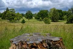 The Park, Kingston Lacy. (margaretgeatches) Tags: summer treestump stormy grey clouds grasses wildflowers green trees park nationaltrustproperty kingstonlacy wimborneminster dorset