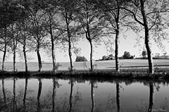 Réflexions le long du canal (IMGP2216 - Version 2) (Dnl75) Tags: canal canaldumidi france landscape reflexion reflet reflection tree arbre noiretblanc blackandwhite
