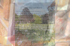 lost words (devonpaul) Tags: cc paper lost words project east budleigh