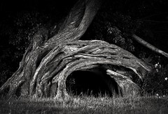 A fallen tree (ainz1607) Tags: dedham shape nature bw abstract tree