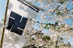 Tsugaru and sakura (しまむー) Tags: pentax mz3 fa 43mm f19 limited kodak gold 200 弘前城 桜祭り