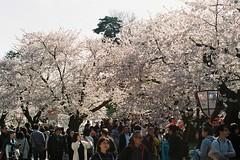 Crowds up and down (しまむー) Tags: pentax mz3 fa 43mm f19 limited kodak gold 200 弘前城 桜祭り