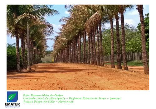 Rosana Melo de Castro - Unidade Local Cristianópolis - Regional Estrada de Ferro - Ipamerí