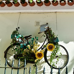 An old bicycle decked with flowers (pedrosimoes7) Tags: bicycle bike bicicleta street streetpassionaward streetimages streetshot streetart streetlight flowers flores florido flowery