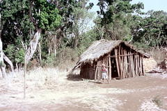 78-656 (ndpa / s. lundeen, archivist) Tags: nick dewolf color photograph photographbynickdewolf 1976 1970s film 35mm 78 reel78 africa northernafrica northeastafrica african ethiopia southernethiopia ethiopian people localpeople trees building house home hut thatchroof thatchedroof child sticks branches wood