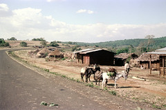78-654 (ndpa / s. lundeen, archivist) Tags: nick dewolf color photograph photographbynickdewolf 1976 1970s film 35mm 78 reel78 africa northernafrica northeastafrica african ethiopia southernethiopia ethiopian sky clouds bluesky people localpeople landscape terrain hill hills building buildings house home hut thatchroof thatchedroof houses homes huts sheetmetalroof animal animals donkey donkeys horse horses beastofburden bags bundles road highway dirtroad pavedroad man localman rural roadside
