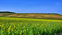 Shadow field (Szymon Karkowski) Tags: outdoor nature landscape fields rape sky cloud tree trees shadow agriculture opole voivodeship czerwonków poland nikon d7100