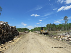 View of a Logging Operation and Road (Gerald (Wayne) Prout) Tags: loggingoperation loggingroad southporcupine cityoftimmins northeasternontario ontario canada prout geraldwayneprout canon canonpowershotsx60hs powershot sx60 hs digital camera photographed photography logging operations road bush forest forestry south city timmins northernontario northern northeastern